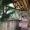 Cabane Spa de Manon